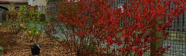 hecke-pflanzen-blühhecke-beerenhecke-online-baumschule