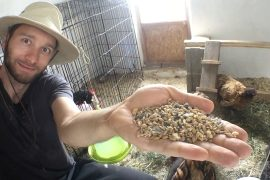 hühnerfutter_bio_futter